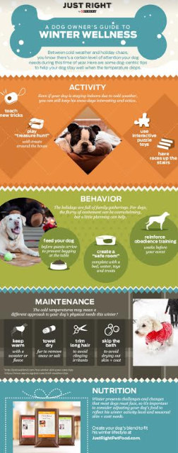 How to Protect My Pet This Winter Infographic
