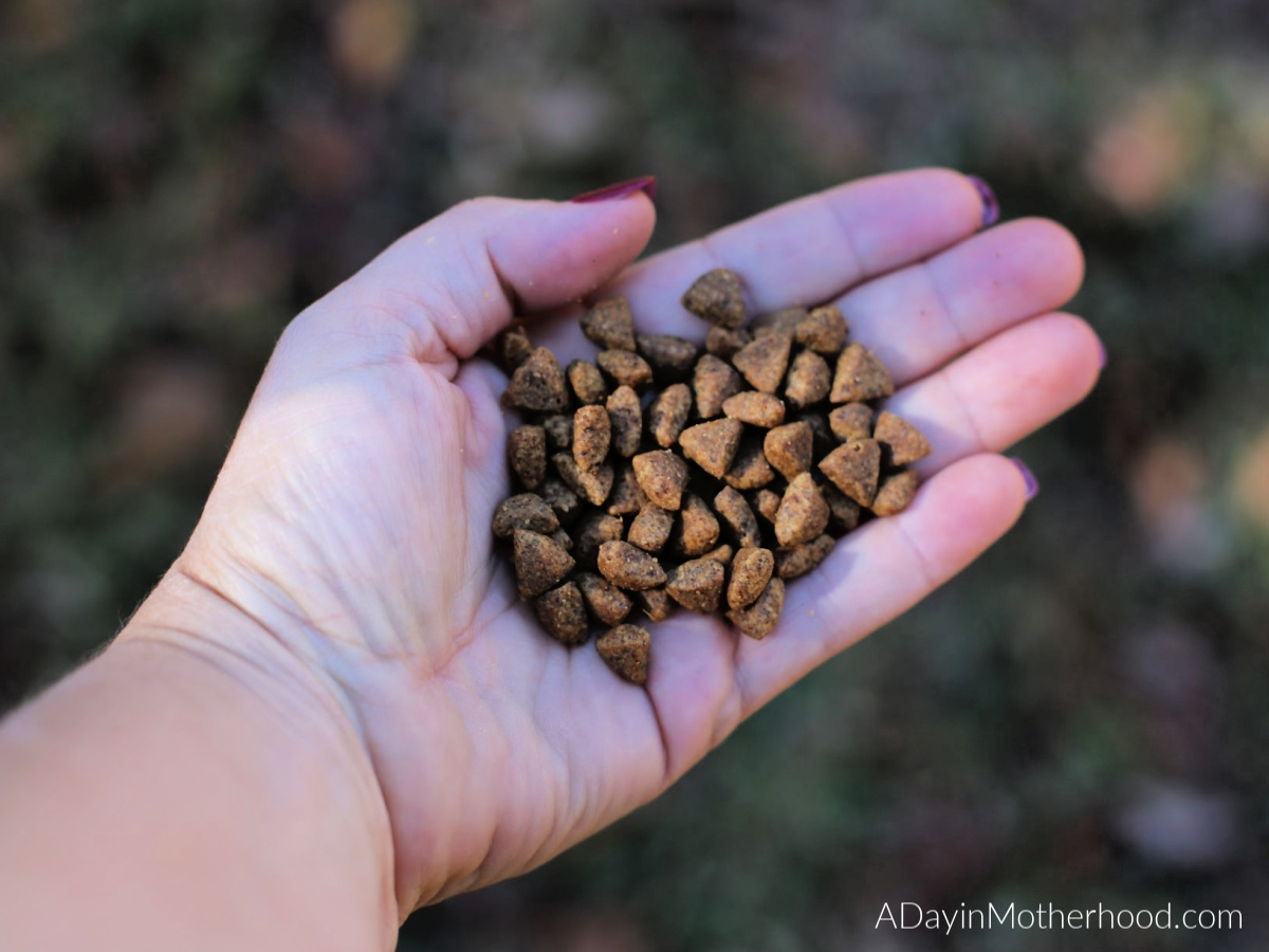 5 Pet Food Industry Myths - BUSTED! what's in the food