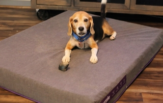 Spoil Your Dogs with a Purple Dog Bed