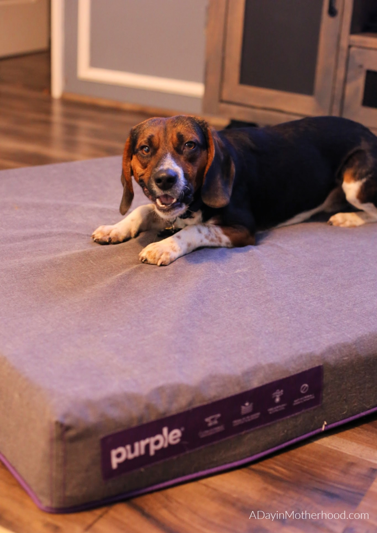 Spoil Your Dogs with a Purple Dog Bed for Patton