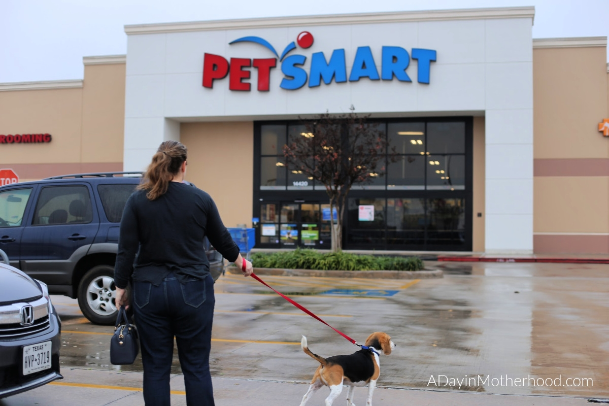 5 Foods Your Should Never Feed Your Dog and What You Can Feed Them from PetSmart