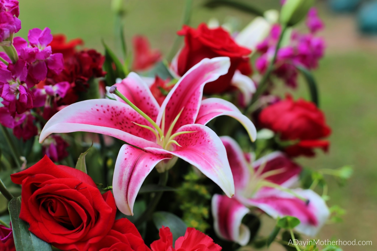Valentine's Day Blooms with Beauty with Teleflora with variety