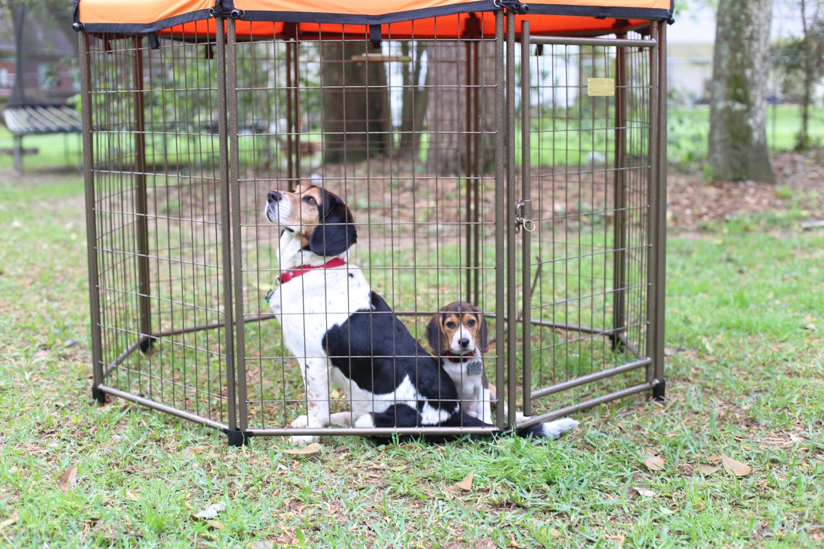 Spoil Your Dog in a Relaxing Kennel from the The Pet Gazebo