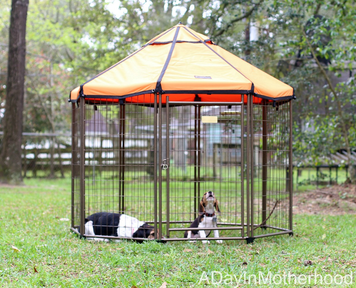 Spoil Your Dog with Space in a Rexlaxing Kennel with the The Pet Gazebo Howling
