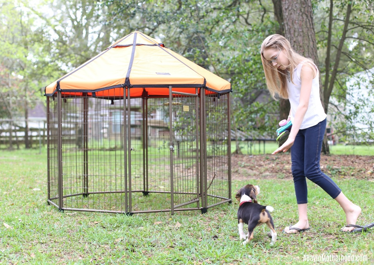 Spoil Your Dog in a Relaxing Kennel from the The Pet Gazebo they will love!
