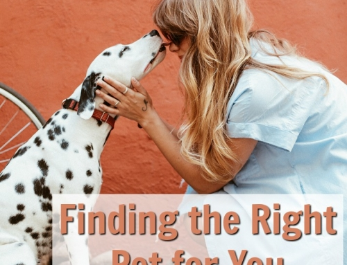 Finding the Right Pet for You