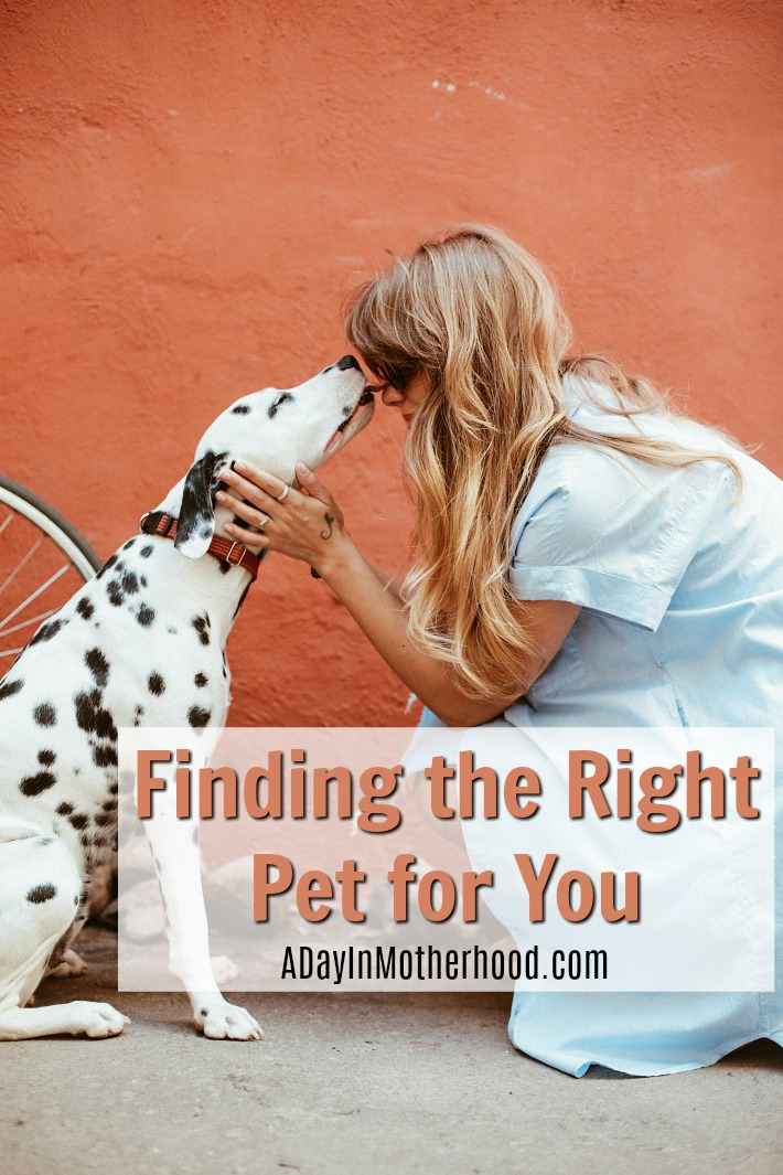 Finding the right pet for your lifestyle doesn't have to be hard.