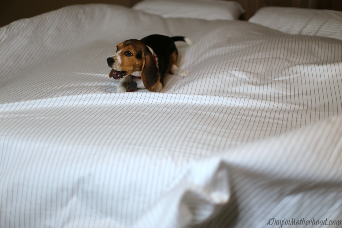 High Quality Sheets from California Design Den Makes Sleep Amazing for my dog, too