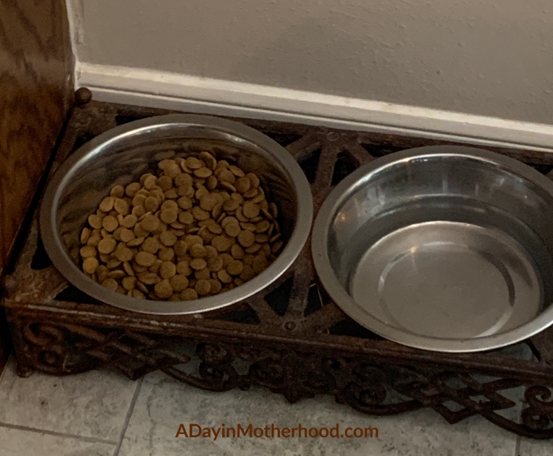 Pet bowl with dog food